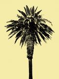 Palm Tree 1996 (Yellow)