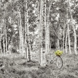 Sunflower Bicycle Ride