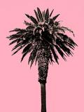 Palm Tree 1996 (Pink)