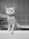 Bert's Bath