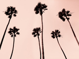 Palm Trees 1997 Copper