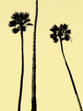 Palm Trees 2000 (Yellow)