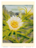 Hawaii Night Blooming Cereus (Hylocereus Undatus) - Honolulu Queen of the Night