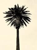 Palm Tree 1979 Tan