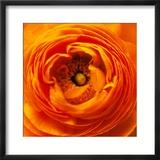 Hearts of Flowers I Photo encadrée par Howard Ruby