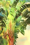 Bird of Paradise Palm I