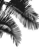 Linear Palm III