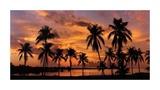 Tropical Sunsets I