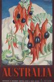 Australia Travel Poster Sturt's Desert Peas