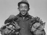 Richard Kobayashi  farmer with cabbages at Manzanar  1943