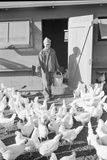 Mori Nakashima feeding chickens  Manzanar Relocation Center  1943