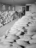 Benji Iguchi with squash  Manzanar Relocation Center  1943