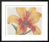 Lys en fleur Reproduction giclée encadrée par Tim O'toole