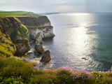 Rugged coastline with wild flowers