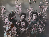 Three girls in kimonos with cherry blossoms