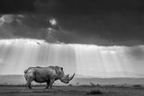A southern white rhino is bathed in rays of evening light as clouds cloak the sinking sun