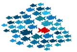 One Fish Swim In Opposite Direction  Dare To Be Different Concept