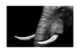 Eléphant Giclée premium par Donvanstaden
