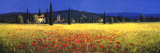 Tuscan Panorama  Poppies