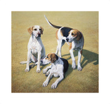 Cotswold Foxhounds