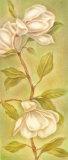 Magnolias I