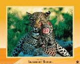 Imaginary Safari  Leopard