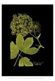 Weinmann Botanical on Black IV
