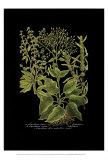 Weinmann Botanical on Black V