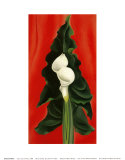Calla Lilies on Red  1928