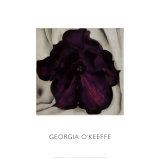 Purple Petunia  1925