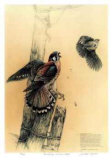 The Getaway - American Kestrel