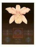 Orchid Matrix I