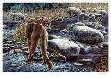 Cougar Crossing