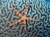 Starfish on Coral
