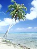 Palm Trees Along Shoreline