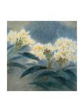 Hibiscus Bush Turning Yellow