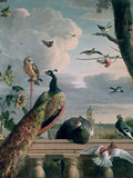 Palace of Amsterdam with Exotic Birds