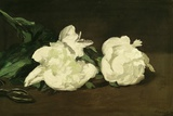 Branch of White Peonies and Secateurs  1864
