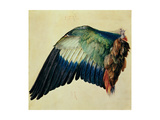 Wing of a Blue Roller  1512