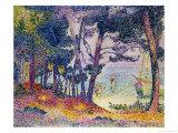 A Pine Grove  1906