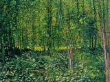 Bois et sous-bois, vers 1887 Reproduction d'art par Vincent Van Gogh