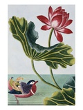 18th Century French Print of Red Water Lily of China II