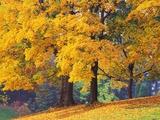 Autumn Foliage at Hoyt Arboretum