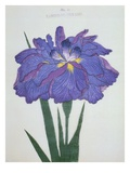 Kamiyo-No Mukashi Book of a Blue and Purple Iris
