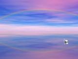 Rainbow Reflecting over Swan