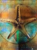 Étoiles de mer Papier Photo par Colin Anderson