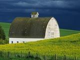 White Barn and Canola Field Papier Photo par Darrell Gulin