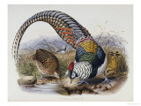 A Monograph of the Phasianidae or Family of Pheasants  1872
