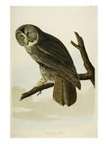 Great Cinereous Owl Giclée par John James Audubon