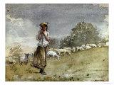 Tending Sheep  Houghton Farm